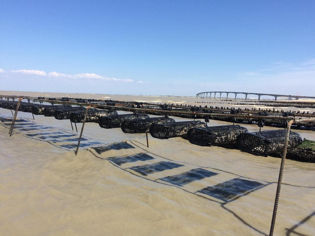 French oyster farm